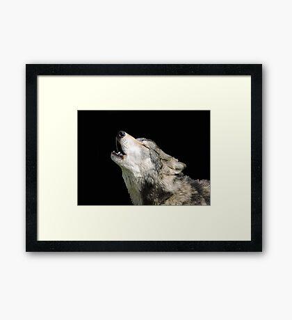 The Jubilation Of The Wolves Framed Print
