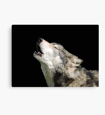 The Jubilation Of The Wolves Canvas Print