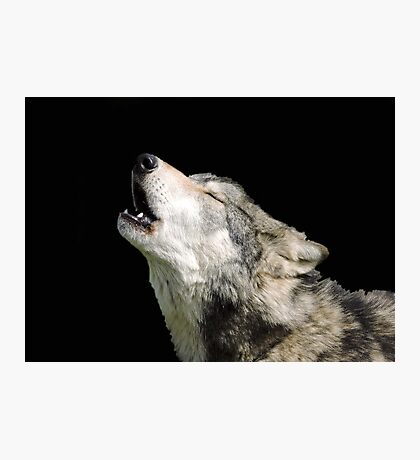 The Jubilation Of The Wolves Photographic Print