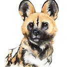 African Wild Dog by Denise Soden