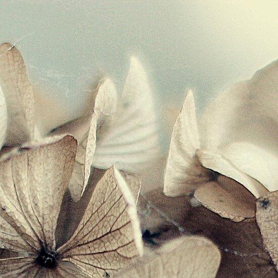 hydrangea~ by theresalasichak