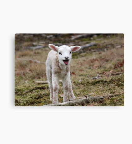 It is Spring - Welcome Little Lamb Canvas Print