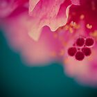 The wonder of the tiniest details ...  by karenanderson