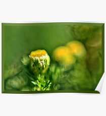 Pineapple Weed Poster