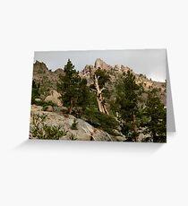 Cedar near Ebbets Pass Sierra Nevada California Greeting Card