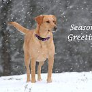 Season's Greetings by DebbieCHayes