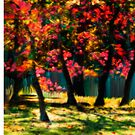 Red Bud Tree - Prints by Daedre Ross