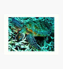 Munching on the Reef, Cairns, QLD Australia Art Print