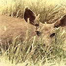 Playing PeekaBoo With a Mule Deer by Noble Upchurch