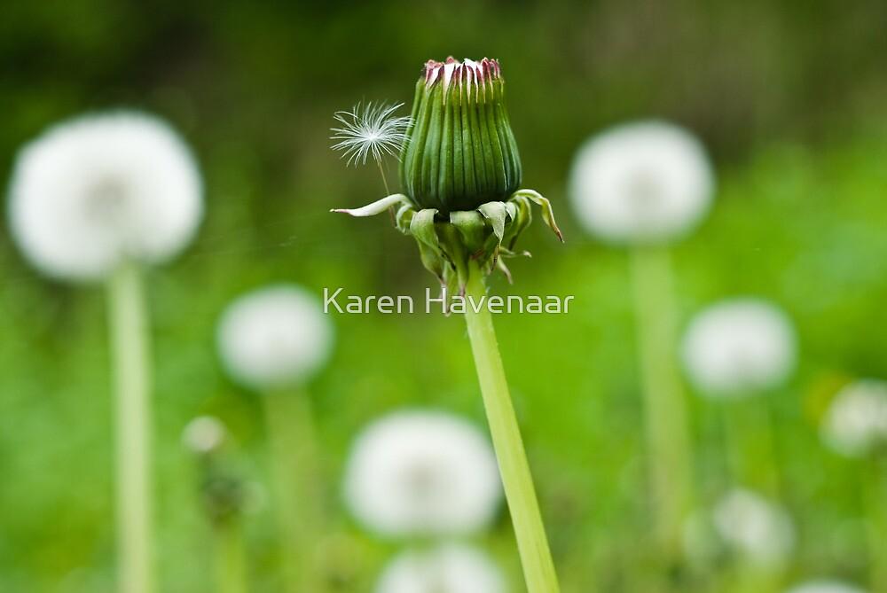 Dandelion Bokeh by Karen Havenaar