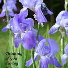 Thinking of You by DebbieCHayes
