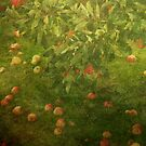 Orchard Tapestry by ©FoxfireGallery / FloorOne Photography