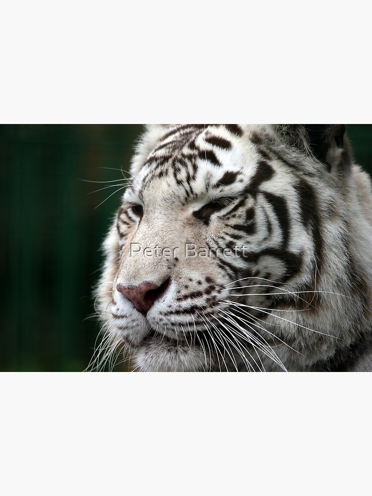 White Tiger by hartrockets