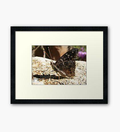 Butterfly ~ Empress Leilia Framed Print