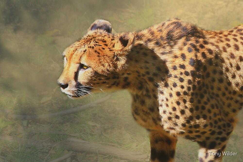 Eyes of the Predator by Tony Wilder