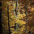 Autumn Jewel by Ann Garrett