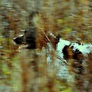 Autumn springer by Alan Mattison