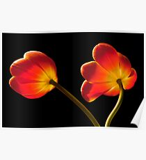 Tulip Dance Poster
