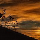 My Morning Sky by Barb Miller