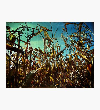 The Cornfields Rise Above Mankind Photographic Print