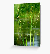 Stand out in Harmony Greeting Card