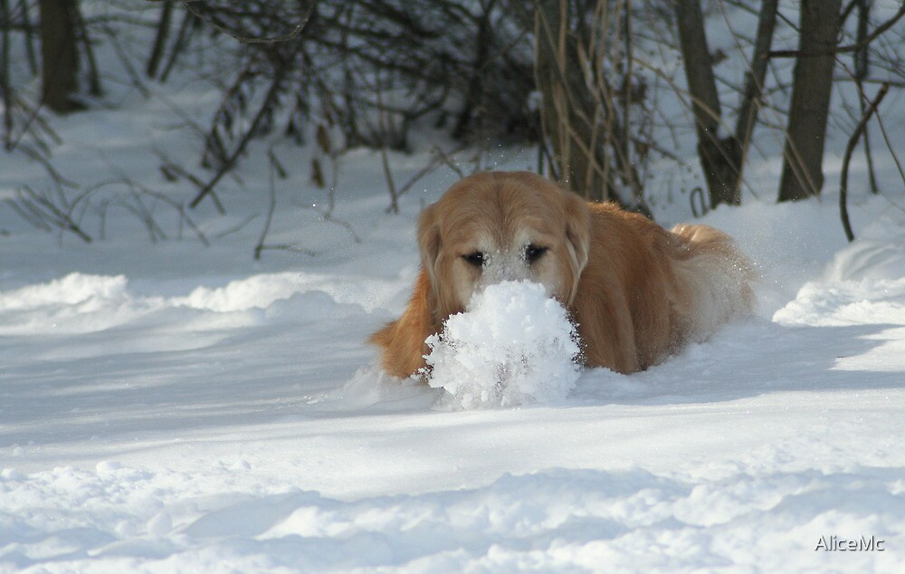 Look At My Snow Ball Ma! by AliceMc