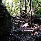 Nature Walk by Jessie Harris