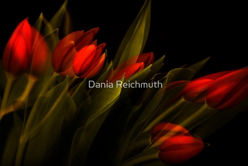 Tulip Study by Dania Reichmuth