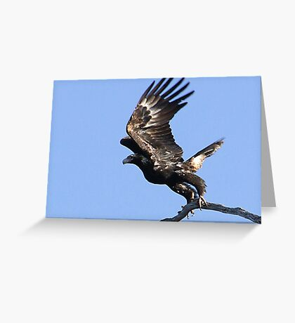 Eagles Away-2 Greeting Card