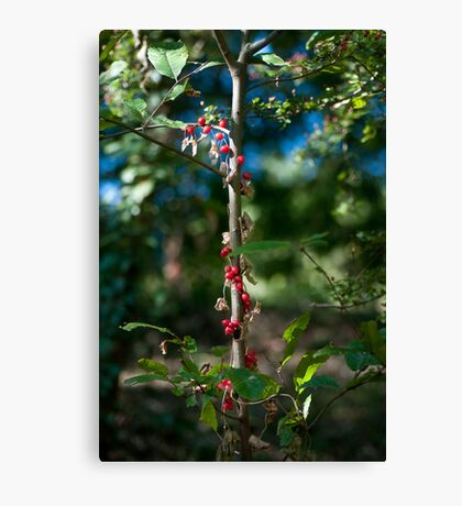 unreal Canvas Print