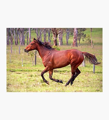 Thoroughbred Photographic Print