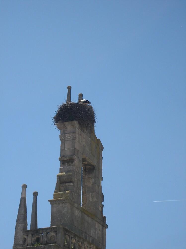 Storks in the belltower by judips