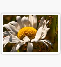 Autumn Daisy Sticker