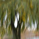 Wind in the Willow by Lynn Wiles