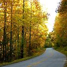 Blue Ridge Parkway by Fred Moskey