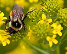 Busy as a Bee by April Koehler