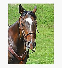 Equine Beauty Photographic Print
