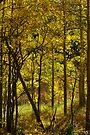 Autumn Dreams by Vicki Pelham