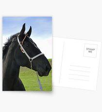 Classic Percheron Postcards