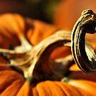 Medieval Dragon Recoils? by Ainsley Kellar Creations