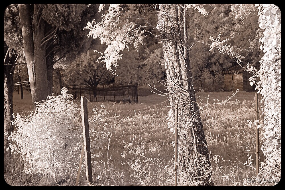 Fences and Trees  by Rene Hales