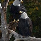Pair of Eagles by Jerry Walter