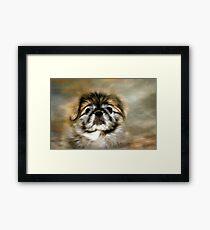 Max the Pekingese Framed Print