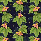 Rosy Maple Moths by somecallmebeth