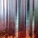 Marsh mood by natans