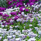 Flowers at Banff Springs Hotel by Roger Bernabo