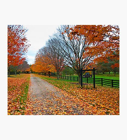 Fall Colors Line the Lane Photographic Print