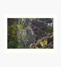 Dew on spiders web Art Print