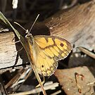 Butterfly At Rest by Rick Playle
