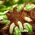 Tree fern by Shelleymay